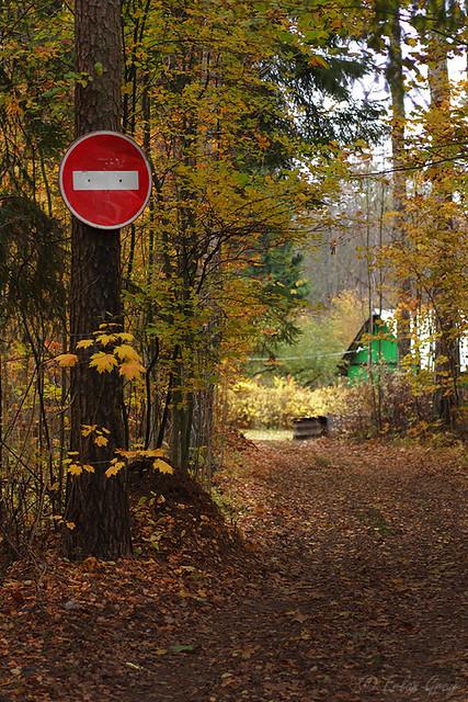 autumn_roads_19
