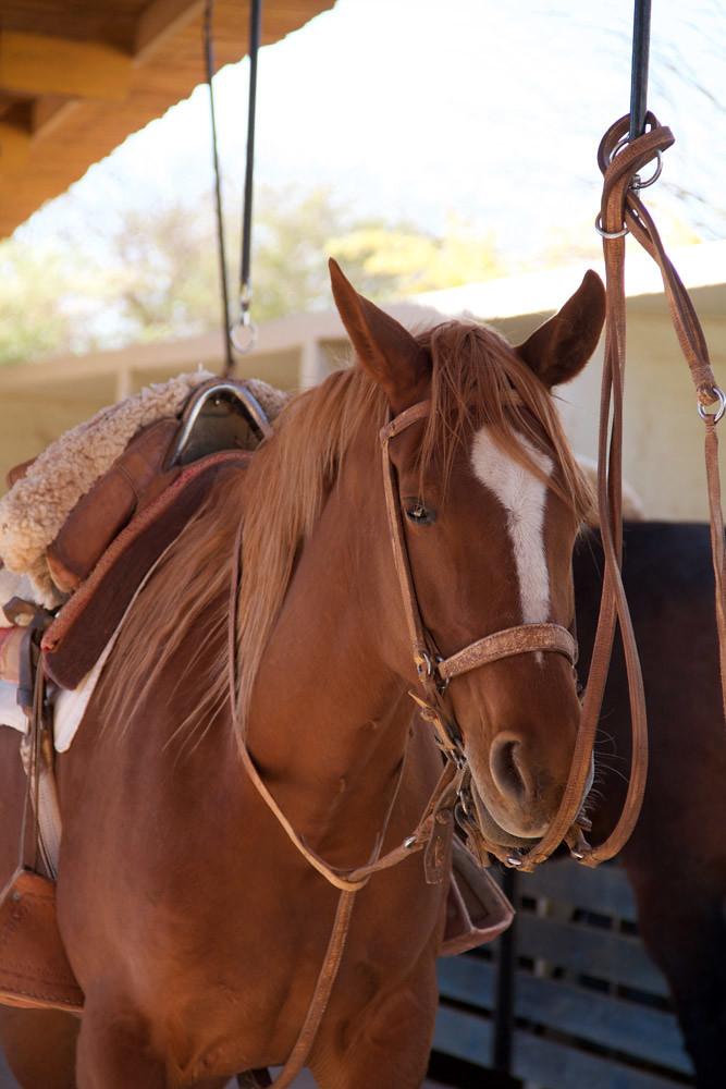 cheval Atacama5