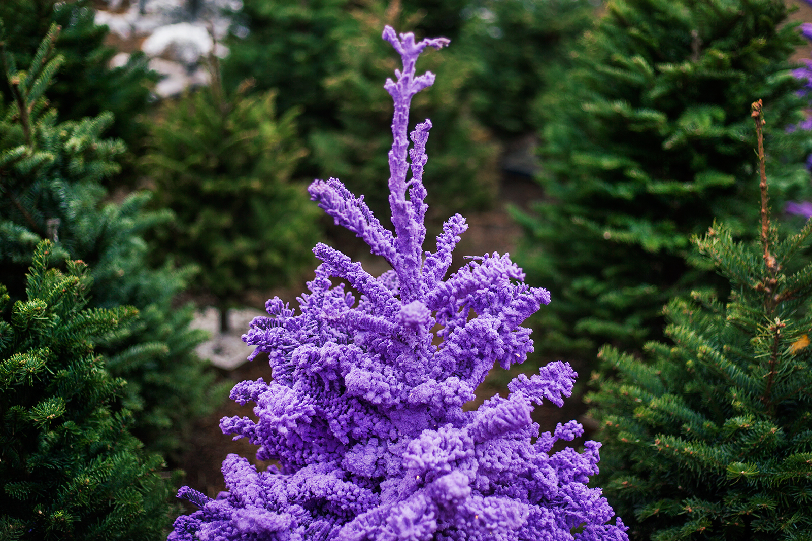 purple flocked tree