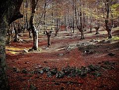 Otoño encendido en los bosques de Gorbeia