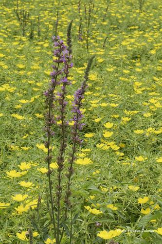 Fleurs bearn pyrénées