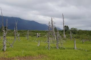 168 Dode bomen