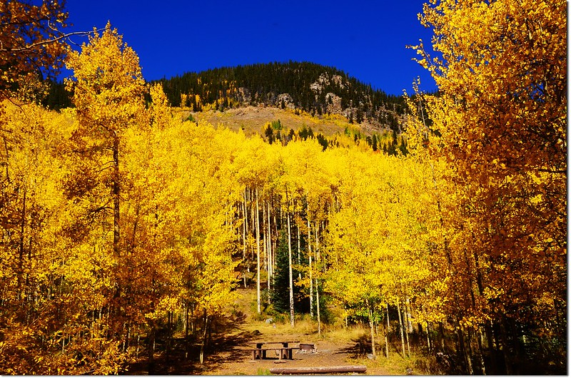 Fall colors at Guanella Pass, Colorado (38)