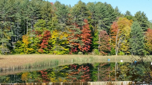 The Foliage in the Mirror - 20151012_104633