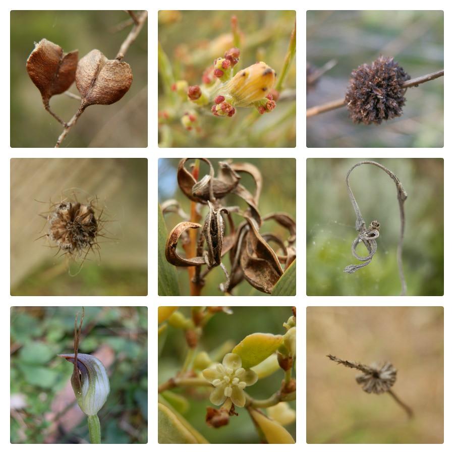 Plants from Little Dip Conservation Park, Robe, Limestone Coast