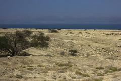 Dead Sea & Jordan Rift Valley 025