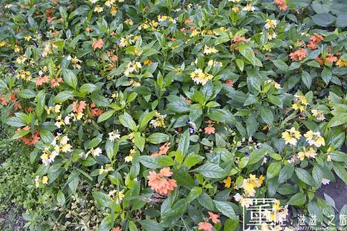彰化菁芳園