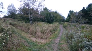 Penny Lake footpath