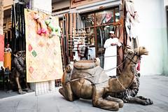 Iron Camel