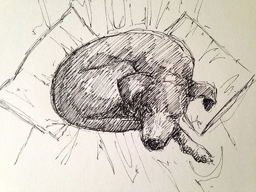 Ten minute sketch of the dog this morning.