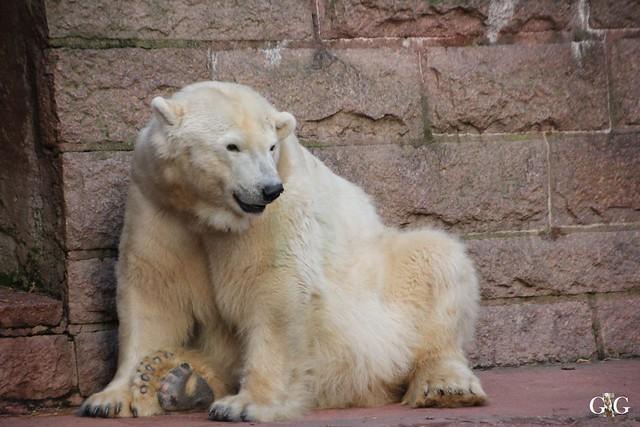 Besuch Zoo Rostock 13.12.2015104