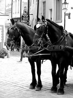 hevosvaljakko