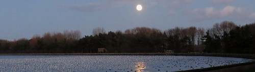 Gull roost and Moon Tophill Low NR, East Yorkshire, December 2015