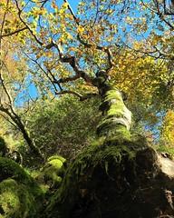 Au pied d'un arbre #lacdespises #path #way #tree #autumn #leaves #trunk #gard #cevennes #dourbies - Photo of Aumessas