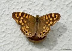 Le papillon et l' Escargot  (série)