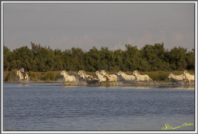 Galop dans le Marais (2)