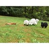 Lawn animal crime scene.