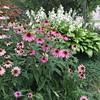 #August #garden in #Oakville