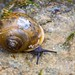 Moving at a snail's pace by The Suss-Man (Mike)