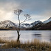 Buttermere Tree. by Tall Guy