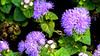 Park flowers by elluckyphoto