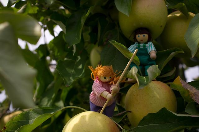 Wild apple hunting