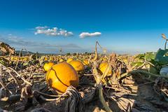 Herbst in Leonding (8 von 10)
