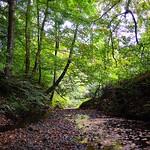 Savick Brook