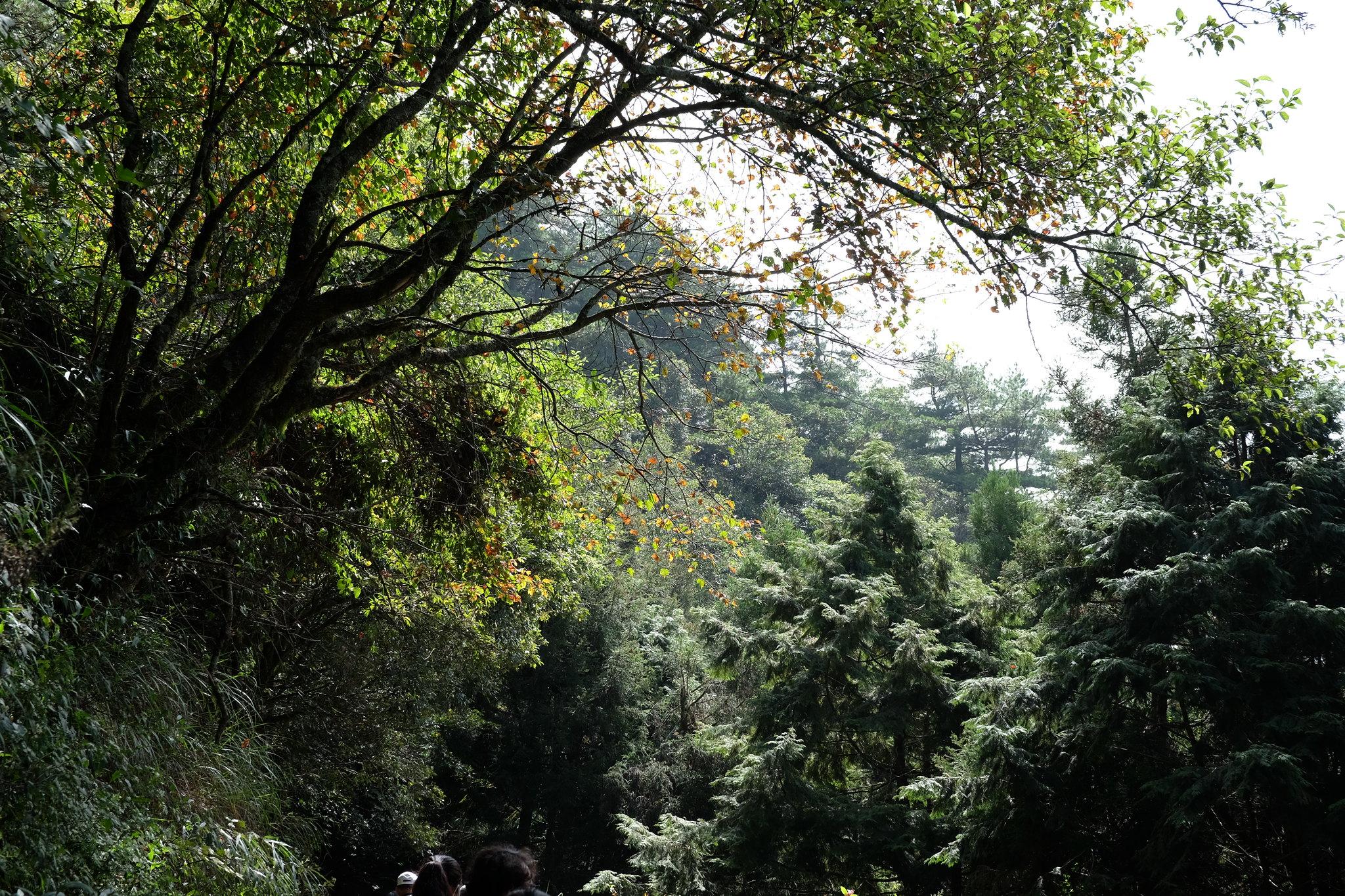 远处树林大楼风景图片
