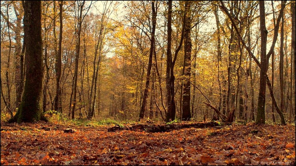 Balade en forêt  22253165343_a881492f3e_b