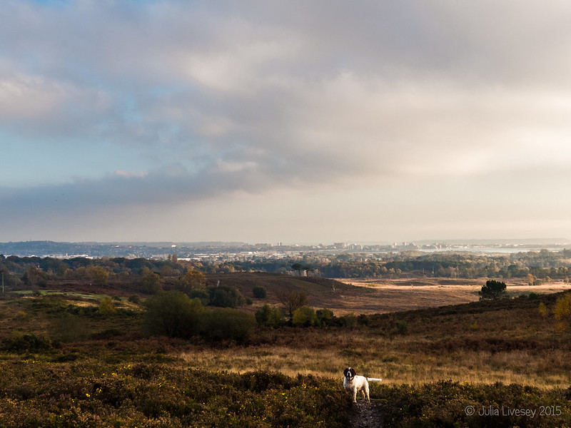 View over Upton Heath and Poole (plus Max)