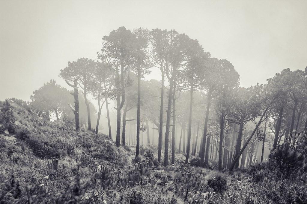Trees in mist :: Santa Maria volcano :: Guatemala