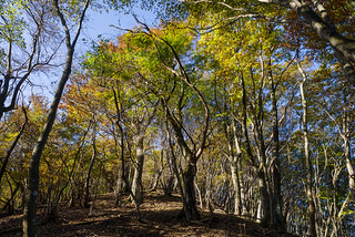 焼山へ向かう稜線の樹林・・・日差しが届き始めた