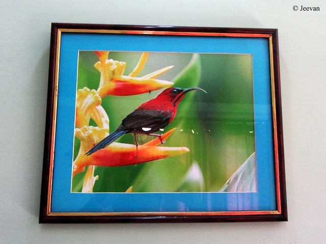 A bird frame
