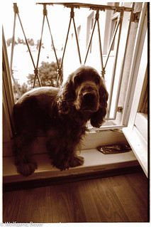 Hund Tobi am Fenster