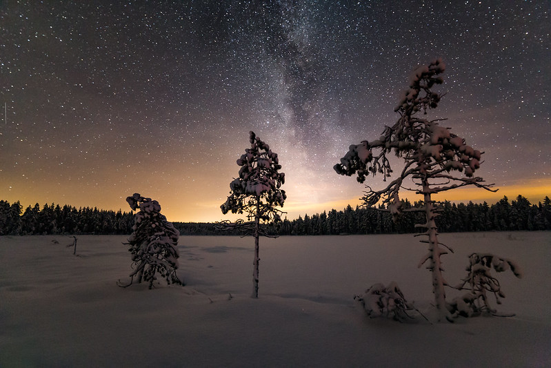 Milky Way behind little trees
