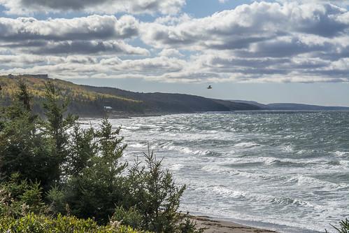 trees fall beach water waves novascotia autum roadtrip hills antigonish northumberlandstraight highway337 easterncanadatrip sunrisetrail dsc4536 nikond7100 october2015 livingstonecove livingstonecovewharfroad
