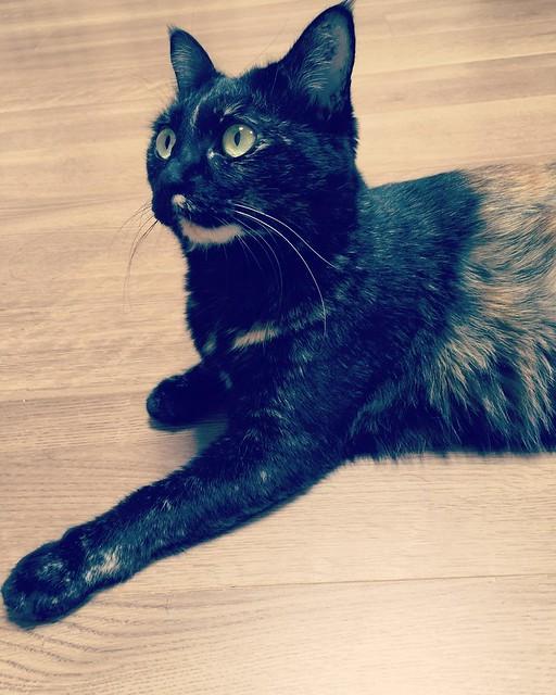 #cat #猫 #ねこ