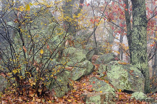 Autumn Mist Blue Ridge Parkway