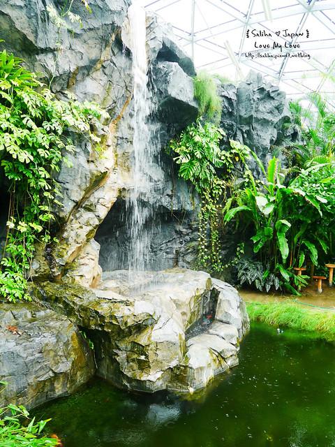 日本東京景點新宿御苑溫室植物 (25)