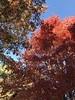 Fall at Arlington Cemetery