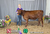 Champion Bucket Calf Intermediate Division