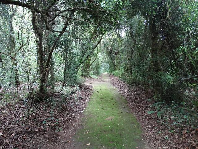 Paseo dos Buxos en el Pazo de Santa Cruz de Rivadulla