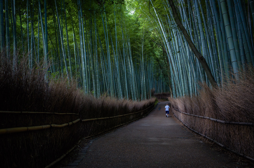 the path of bamboo, revisited #35 (Sagano, Kyoto)