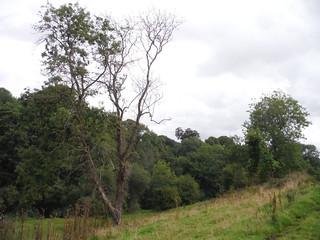 Oddford Vale (II)