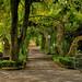 Segnali d' autunno nel parco di Villa Bruno by agedsenator