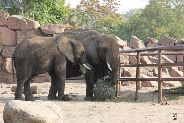Sonntags-Besuch im Tierpark Friedrichsfelde 04.10.201549