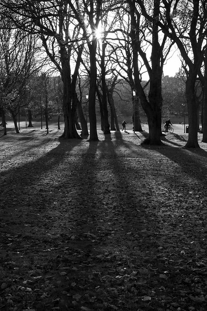 Middle Meadow Walk - Autumn trees and shadows