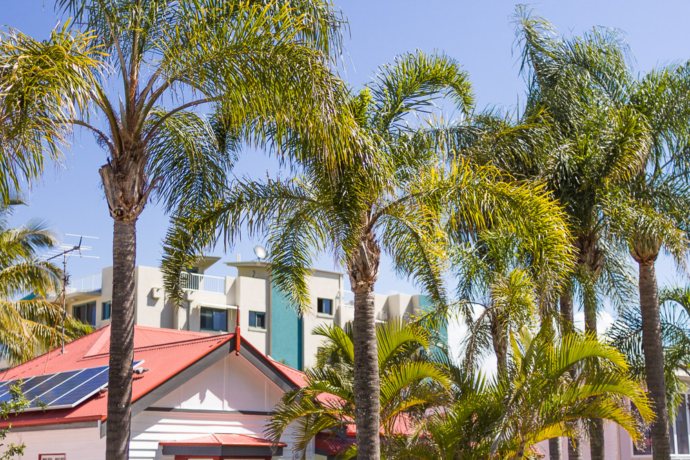 ian street caloundra town red roof palm trees