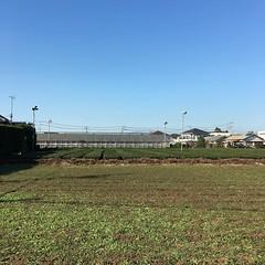 狭山茶の畑だ。